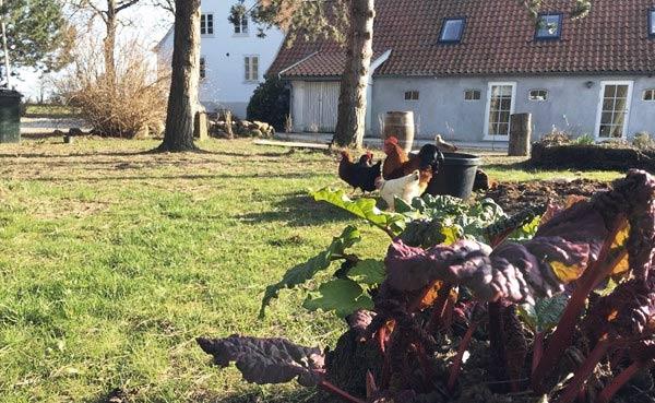 Livet myldrer frem på Kirsebærgården
