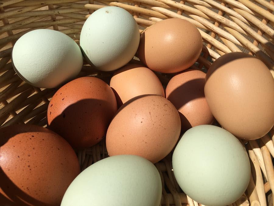 Æg i flere farver