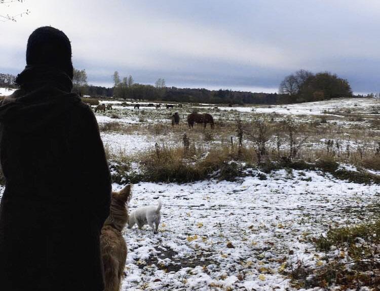 Nyhedsbrev november 2016: Vinter på Kirsebærgården